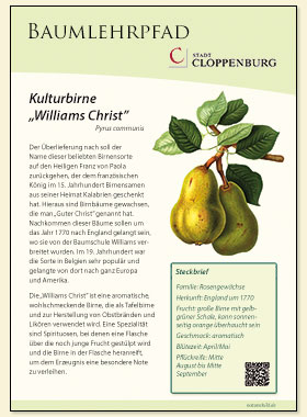 Kulturbirne Williams Christ
